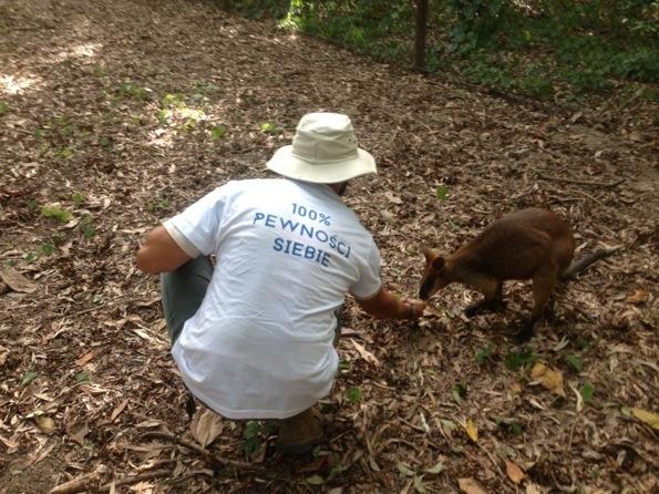 Cassowary attack victim - photo#3